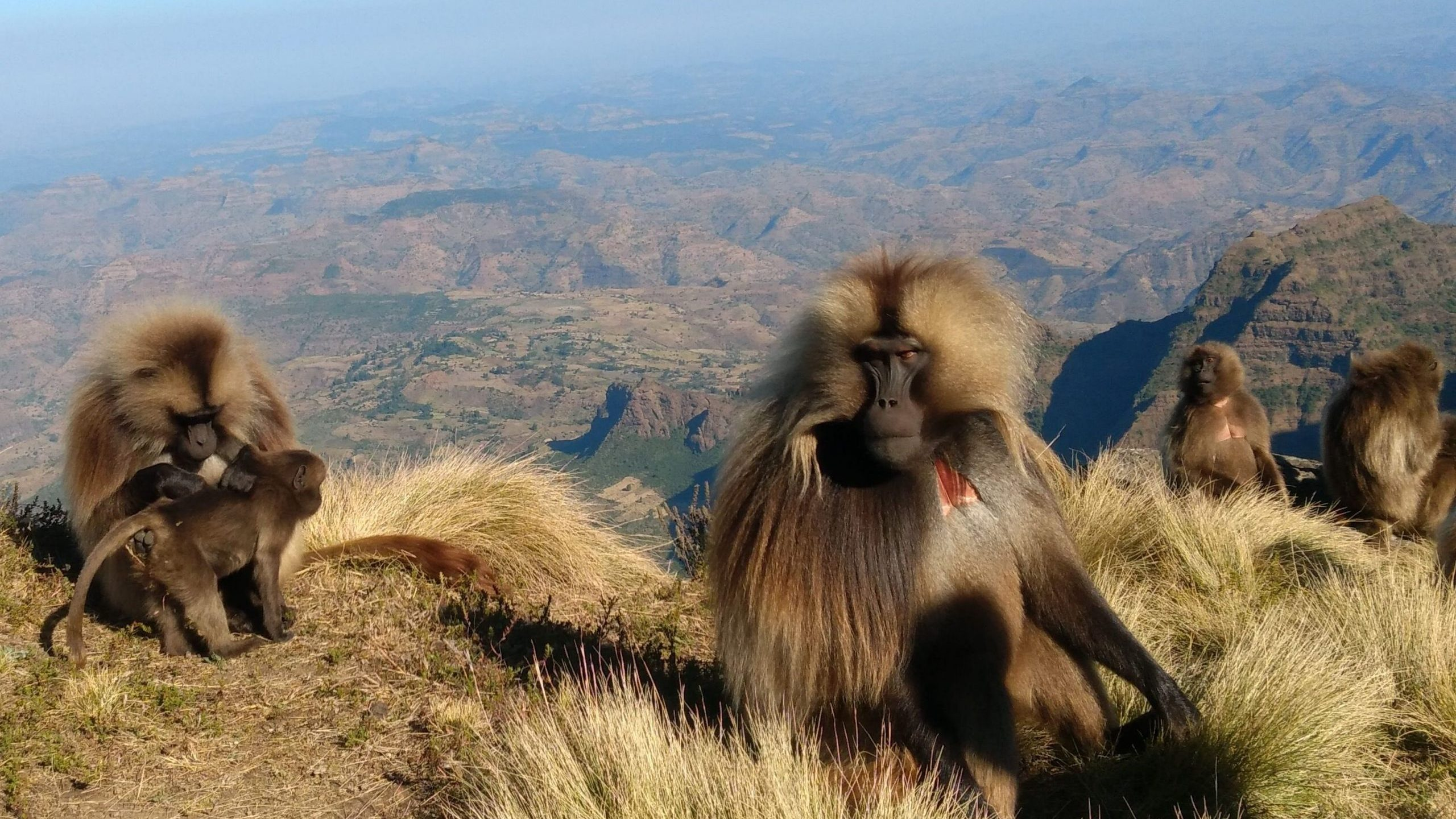 Simien Mountains Gelada Research Project